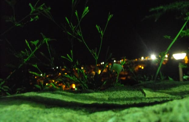 Calasparra de Noche