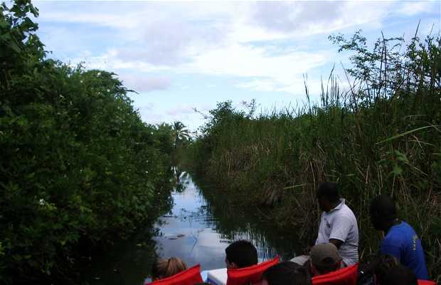 Laguna Limón