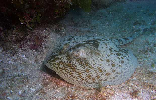 Buceo en Islas Tortuga