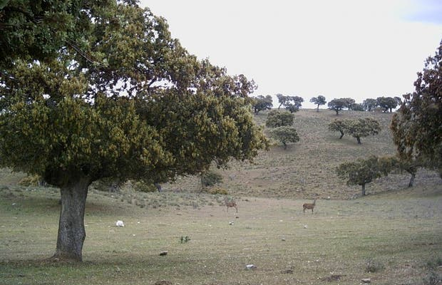 Campo de Cáceres
