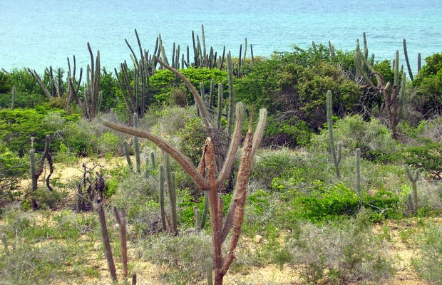 Macanao peninsula - excursion 4 x 4