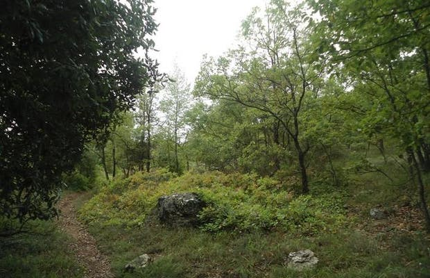 La forêt de Gourdon