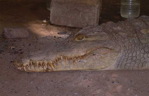 Kachikaly Crocodile Pool