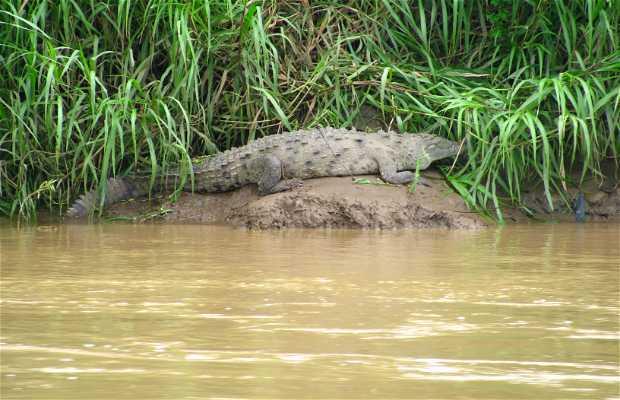 Safari di coccodrilli sul fiume Tárcoles