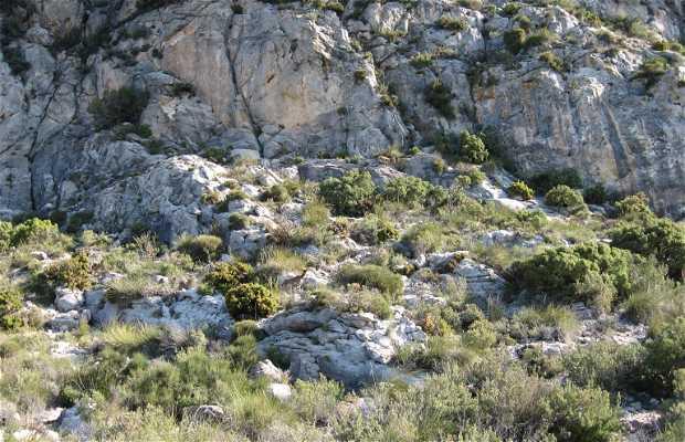 Bosco di pini di Juanar a Ojén