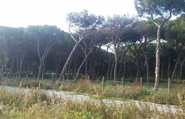 Reserva Estatal Tenuta di Castel Porziano