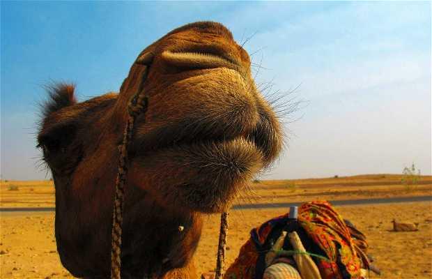 Deserto di Thar