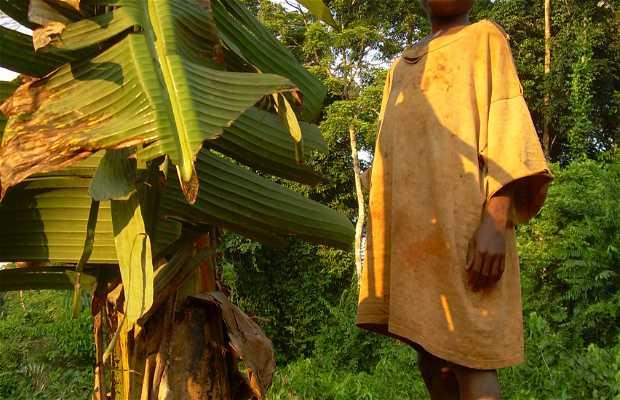 Forêt des pygmés Baka