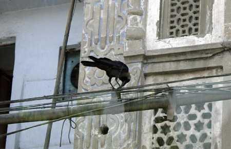 Barrio Jamia Nagar