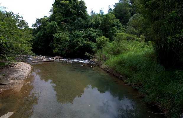 Plantaciones de té Sabah