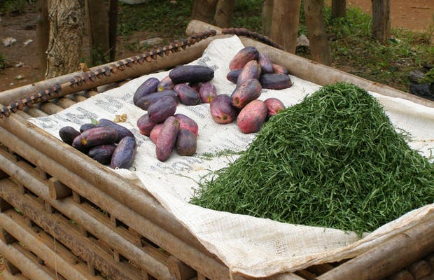 Bafut market