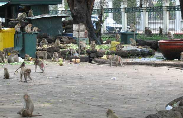 San Phra Karn Shirne an Appetizer for the Monkeys