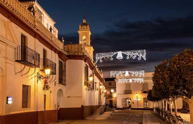Olivares en Navidad