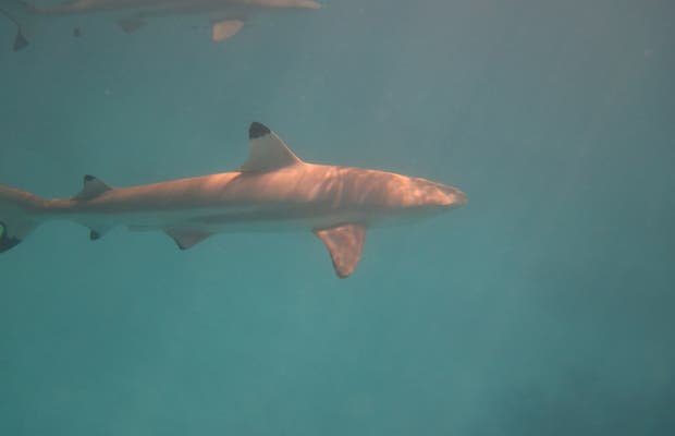 Snorkeling a Bora Bora