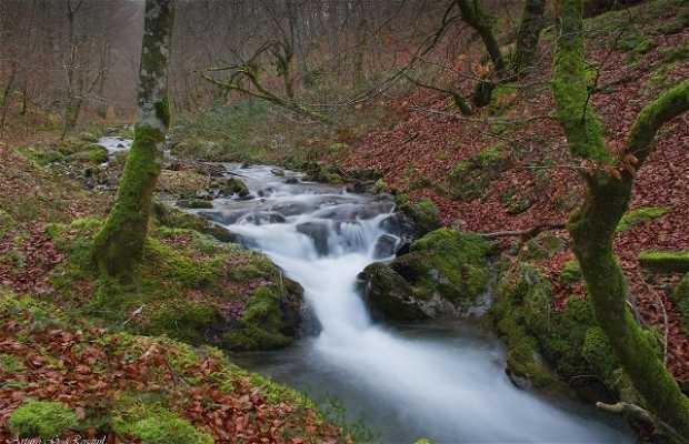 Bosque de Quinto Real