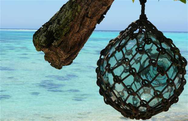 Playa pineapple