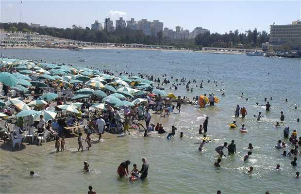Playas de Alejandria