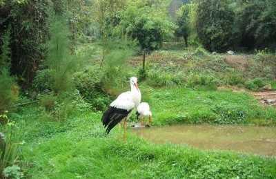 Zoo La Grandera