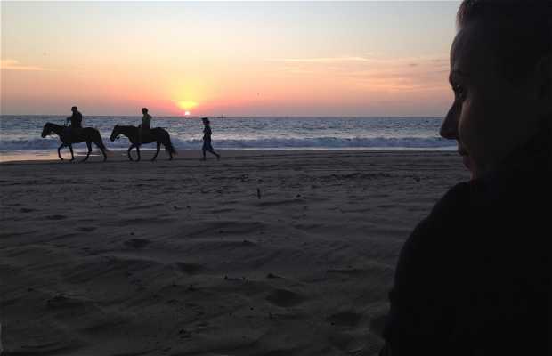 Paseos a caballo por Máncora