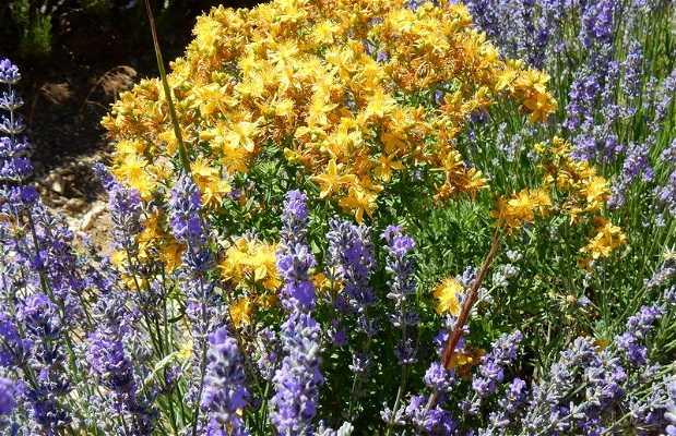 Aroma'Plantes