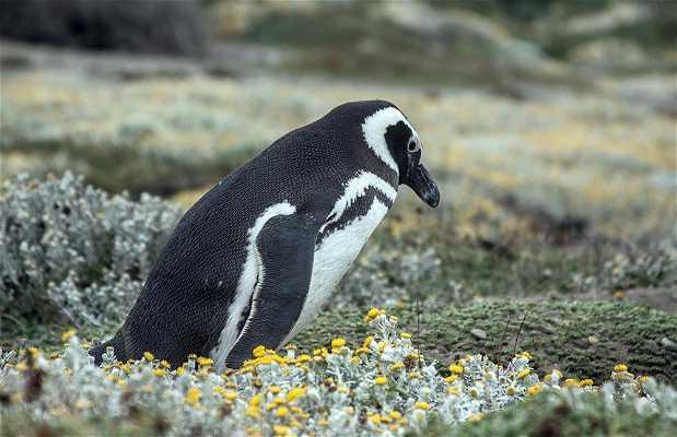 Pingüinera Seno Otway