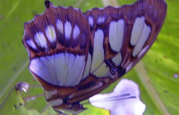 Xcaret Butterfly Garden