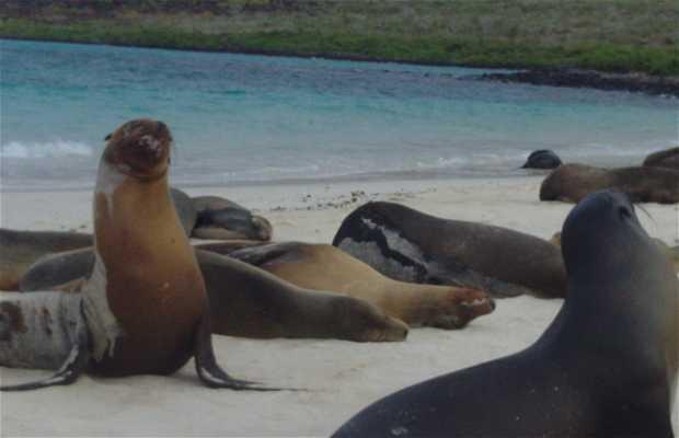 Isla Isabela - Galápagos