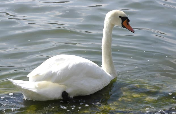 Lago Greifen, zona Egg