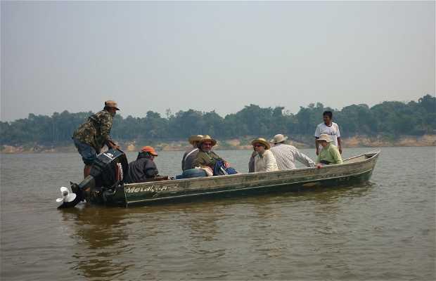 Voadeiras del río Amazonas
