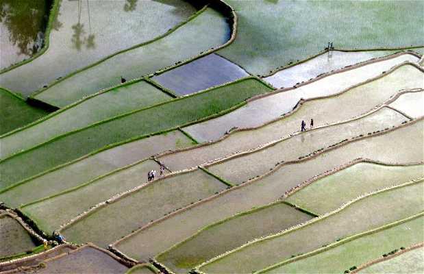 Terraços de Arroz de Banaue