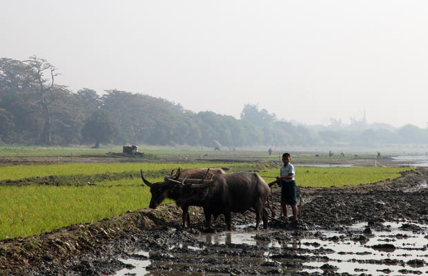 Plowing and harrow Amarapura