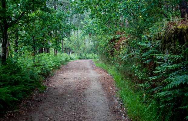 Bosques en el Camino de Santiago