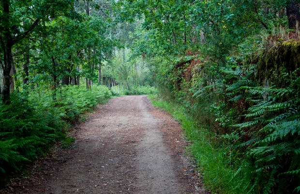 Forêts sur le chemin de Compostelle
