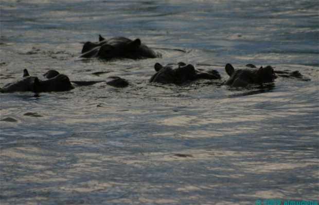 Traversata del fiume Zambesi