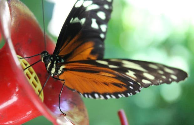 The Butterfly Farm Aruba