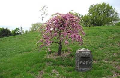 Cementerio Green Wood