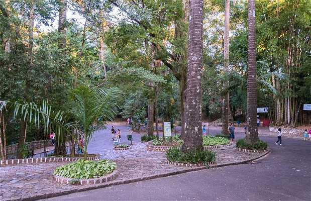 Bosque de Jequitibás