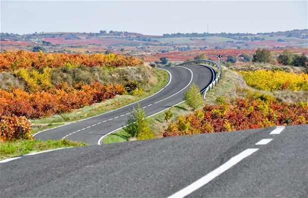Carretera de los viñedos