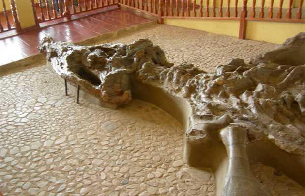 Museo Paleontólogico - El Fosil