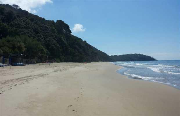 Spiaggia dell'Arenauta