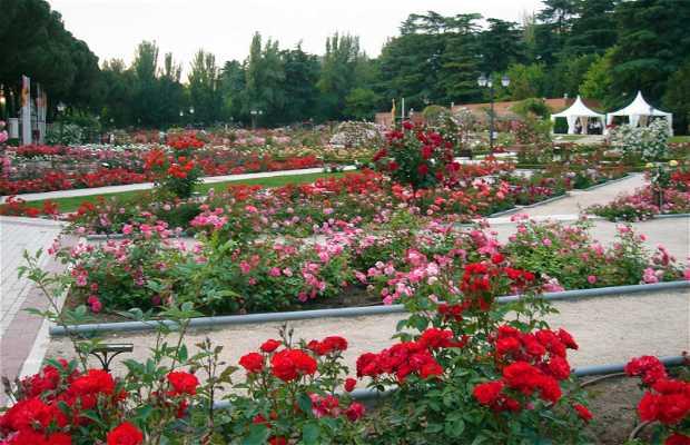 West Park rose garden