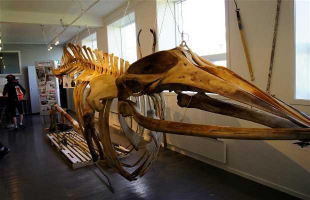 Norsk Kvalfangermuseum Norwegian Whalers' Museum
