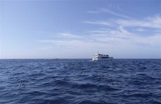 Avistamiento de Ballenas con Terra Azul