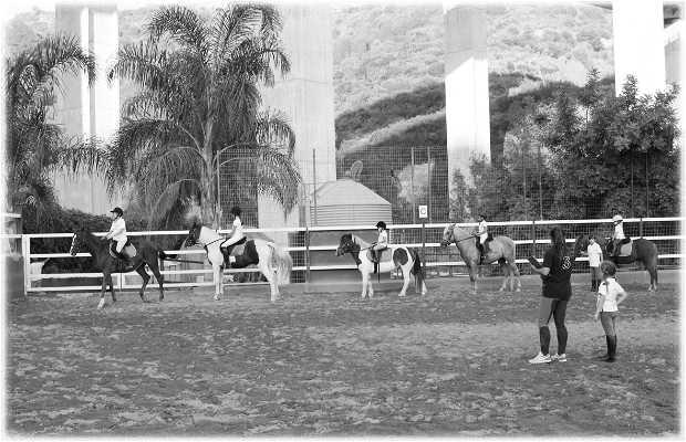 Club Hípico Arrocha Equitacion