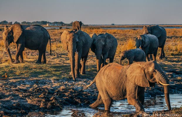 Parco Nazionale di Chobe