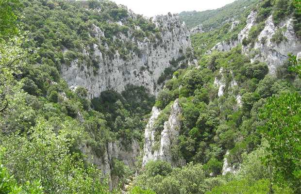 Valle de Cathare