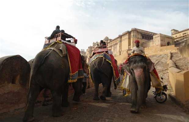 Paseo con elefantes