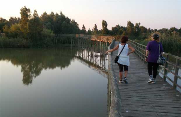 Corredor verde del río Guadiamar
