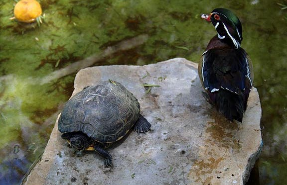 Parco ornitologico e botanico La Alcua a El Borge