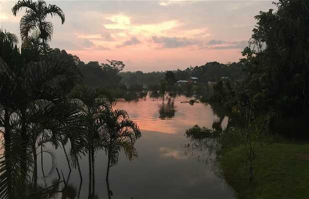 Llanchama- iquitos